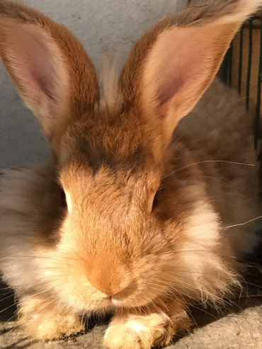 Kuva_bunny